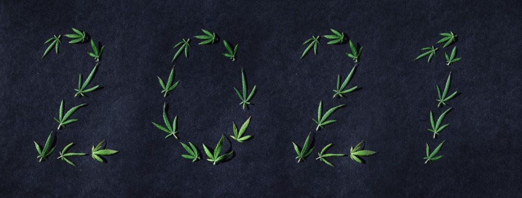 Cannabis thérapeutique et médical en France 3